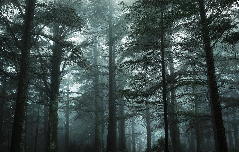 Фото обои зелень, лес, деревья, туман, Франция, мох, Nikon, дымка, Green, Tree, France, Mist, Прованс, Fog, Mood, …