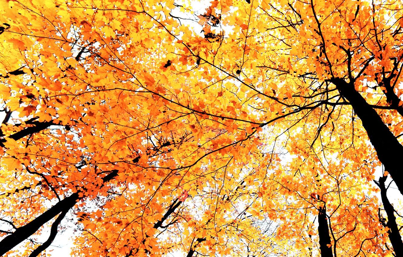 осенние деревья ветка картинки экране