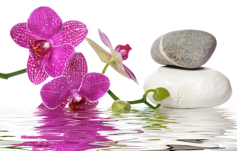 Обои Spa, цветы, spa stones, орхидеи, Вода, Спа камешки. Разное foto 16