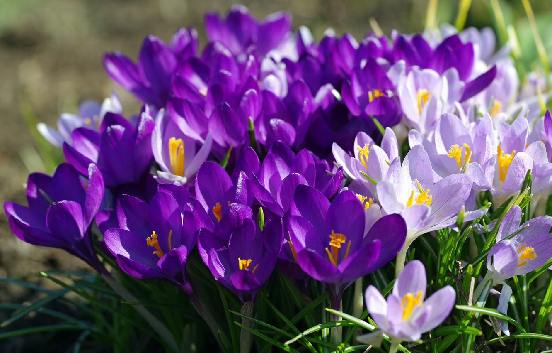 продукты, наилучшие фото весны нелюбимой