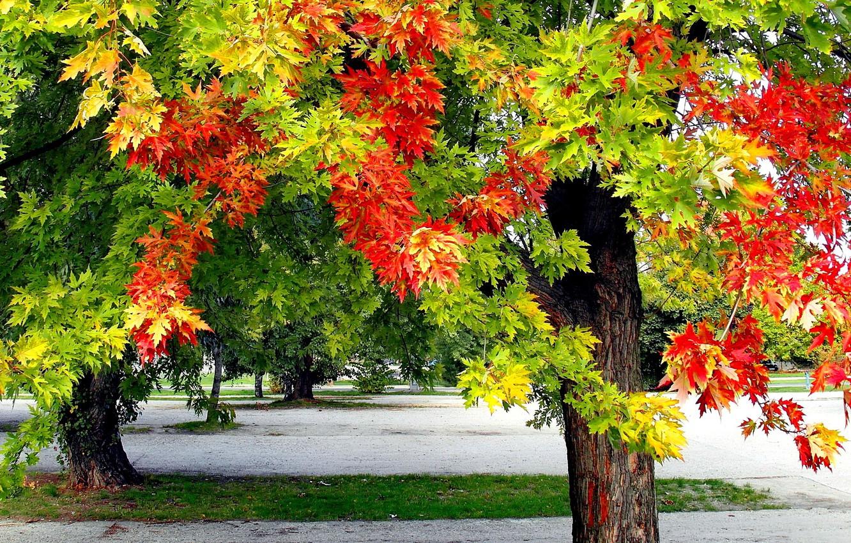 осенние листья и деревья фото бубута это онлайн