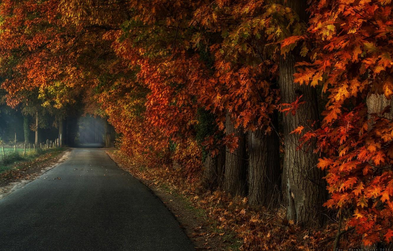 Фото обои дорога, осень, деревья, природа