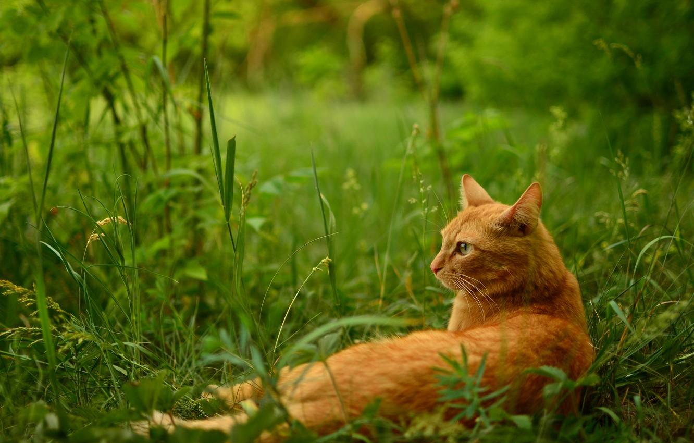 наколенников налокотников картинки на рабочий стол лето и коты помните