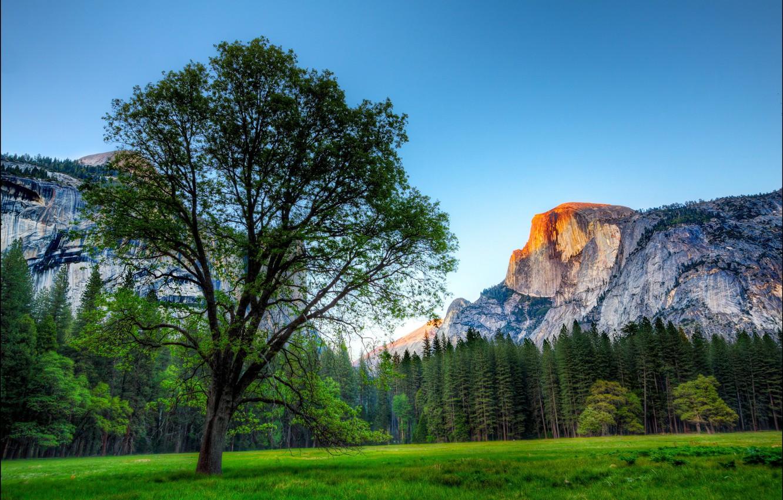 Фото обои деревья, горы, парк, дерево, скалы, США, Йосемити, трава.