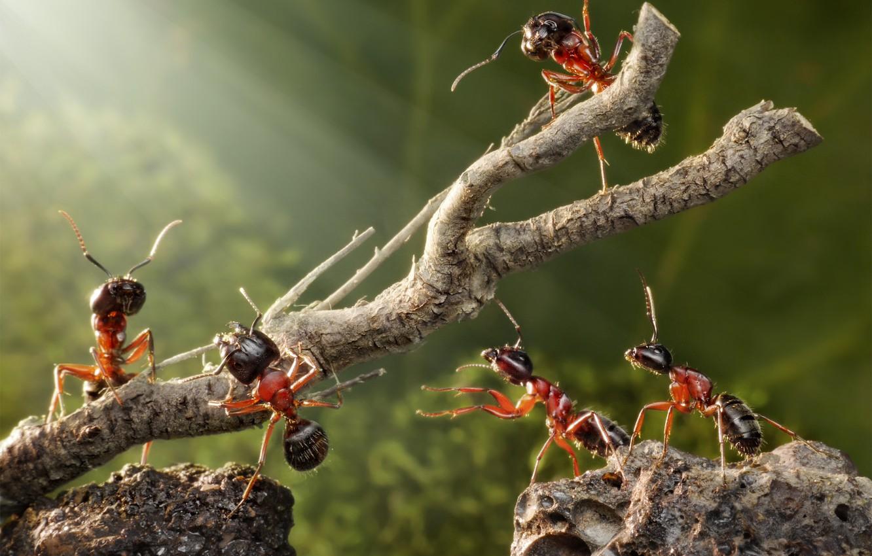 Фото обои лето, макро, насекомые, зеленый, ситуация, ветка, муравьи, камушки, обои от lolita777