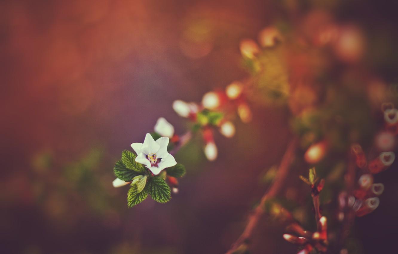Фото обои закат, природа, весна, боке, веточки