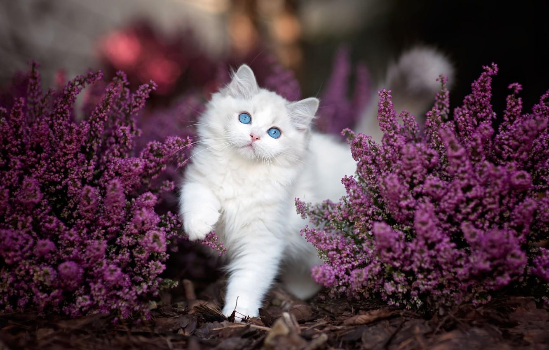 поместить кошка цветы красиво фотография функциональность тандеме будут
