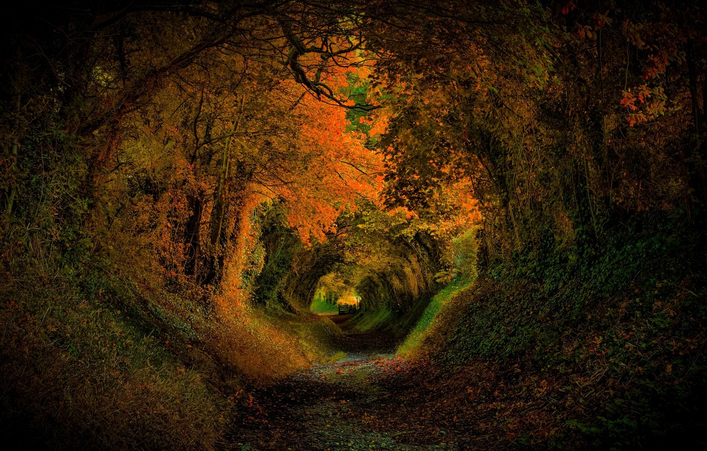 Фото обои дорога, осень, лес, листья, деревья, природа, парк, colors, colorful, forest, road, trees, nature, park, autumn, …