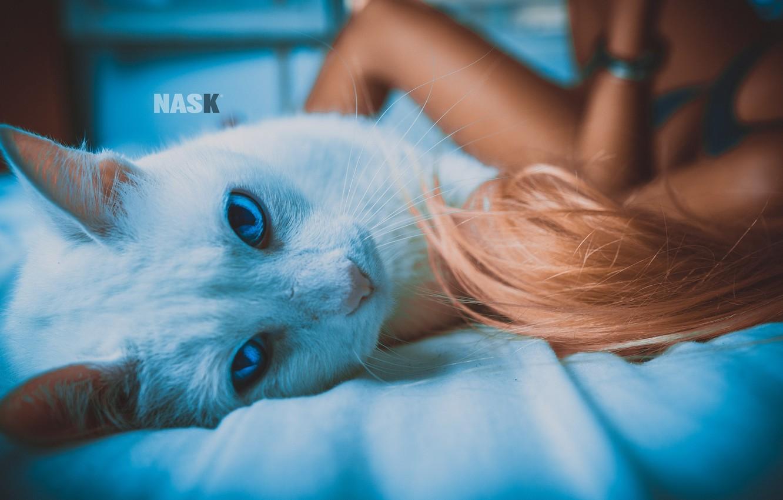 Обои серый фон, Девочка, Коты, кошки. Разное foto 18
