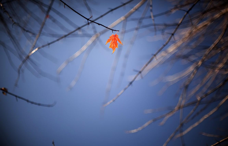 Фото обои осень, небо, лист
