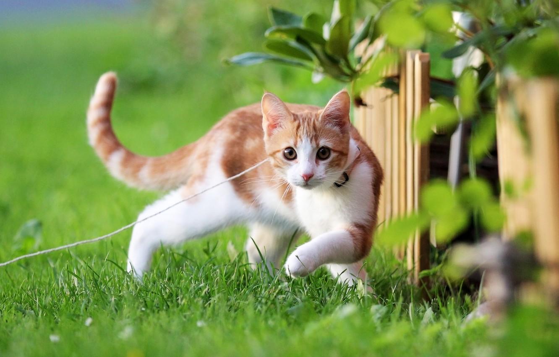Фото обои зелень, лето, кот, природа, Котенок, рыжий