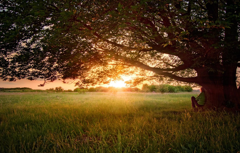 Фото обои лето, природа, дерево, чувак, июнь, мабуть