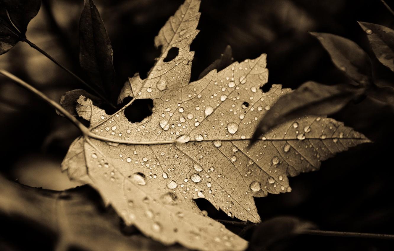 Фото обои Fall, leaves, drops