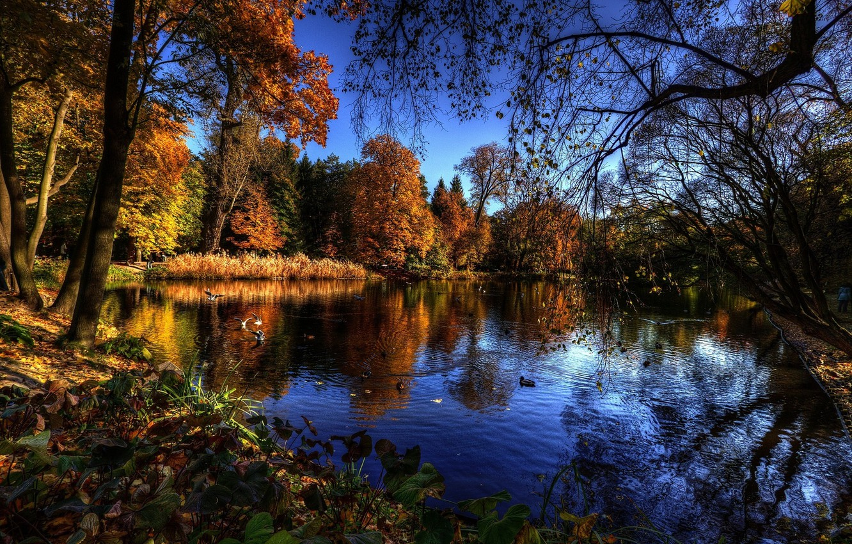 Фото обои trees, water, autumn, lake, birds, branches