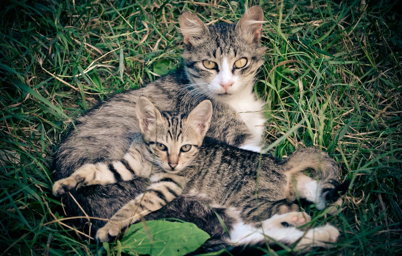 Фото семьи кошек