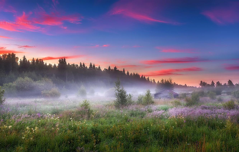 Фото обои поле, лето, туман, утро