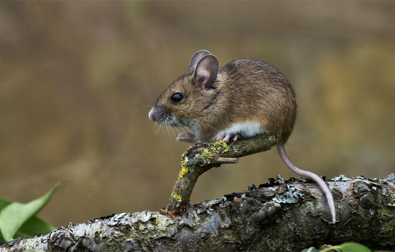 Мышиные картинки, открытки