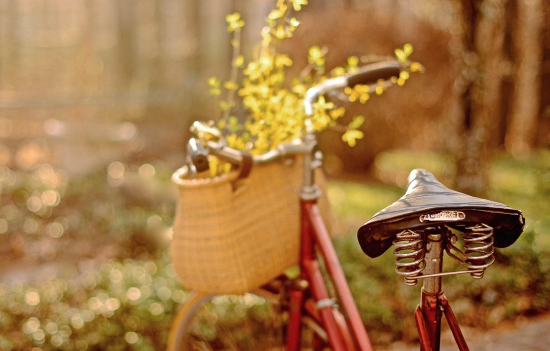 Фото обои цветы, велосипед, лепестки, боке