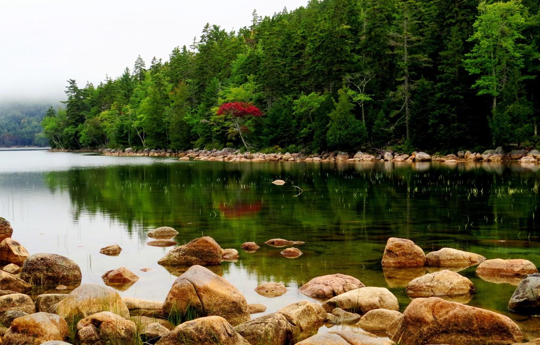 Фото обои лес, деревья, туман, река, камни, США, Maine, Acadia National Park