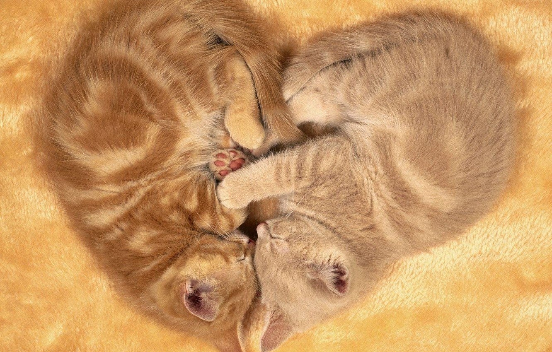 Фото обои вместе, котята, двое, спят, лежат