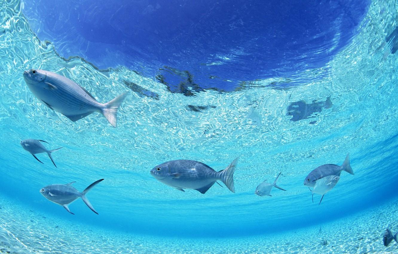 Фото обои вода, рыбы, природа, океан