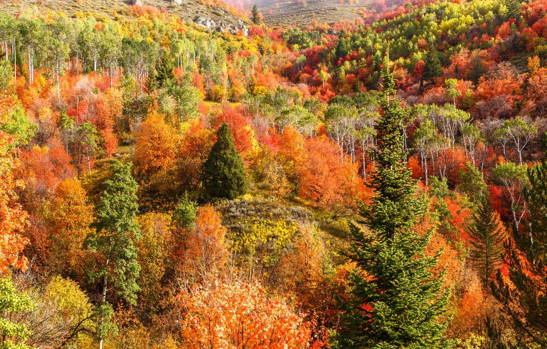 Фото обои осень, лес, деревья, горы, холмы, склон