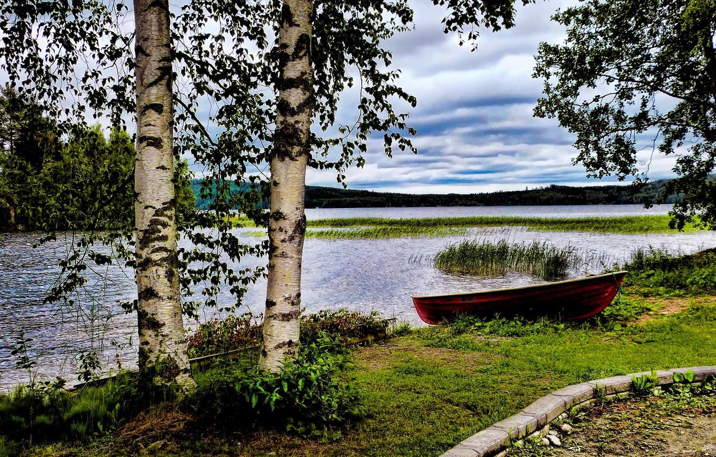 Фото обои трава, озеро, камыши, берег, лодка, берёзы