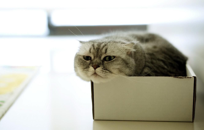 Фото обои кошка, дом, коробка