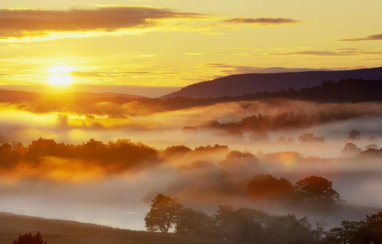 Обои восход, ёлки, утро. Природа foto 17