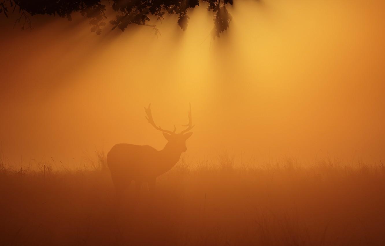 Фото обои ночь, туман, олень