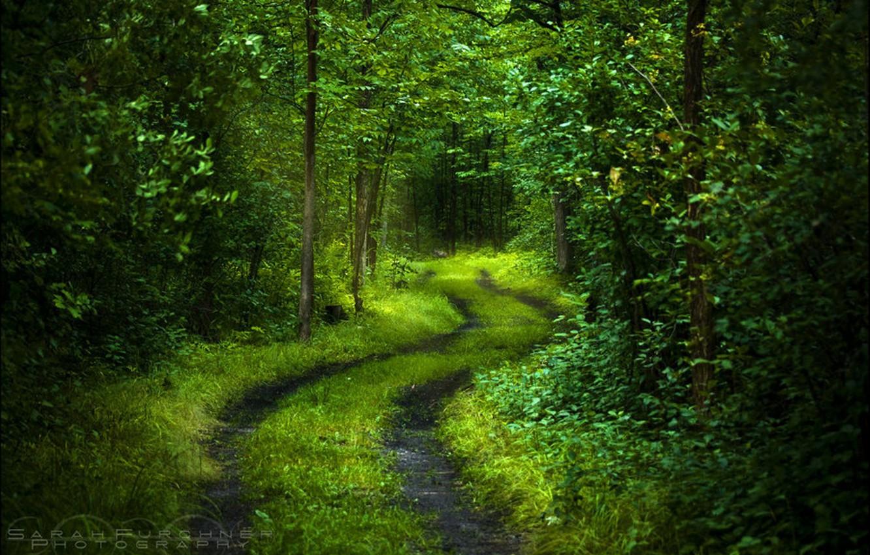 Фото обои дорога, лес, свет, деревья, свежесть, природа, зеленый, настроение, листва, спокойствие, таинственный