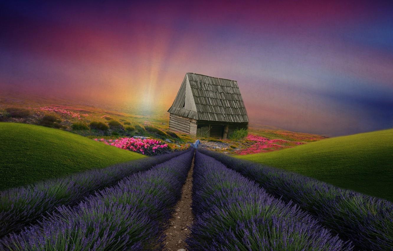 Фото обои пейзаж, цветы, дом, холмы, растительность, луга