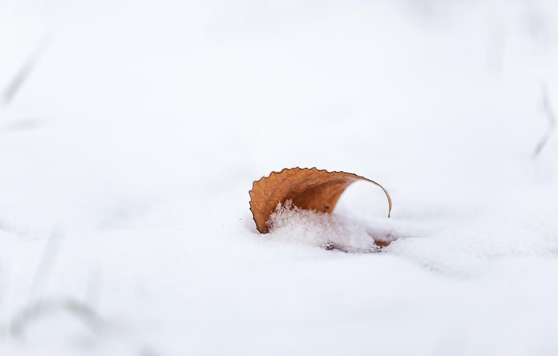 Фото обои осень, снег, лист