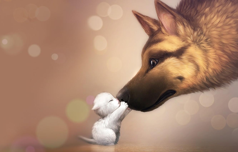 Фото обои любовь, нежность, собака, семья, котёнок, dog, kitty, mommy
