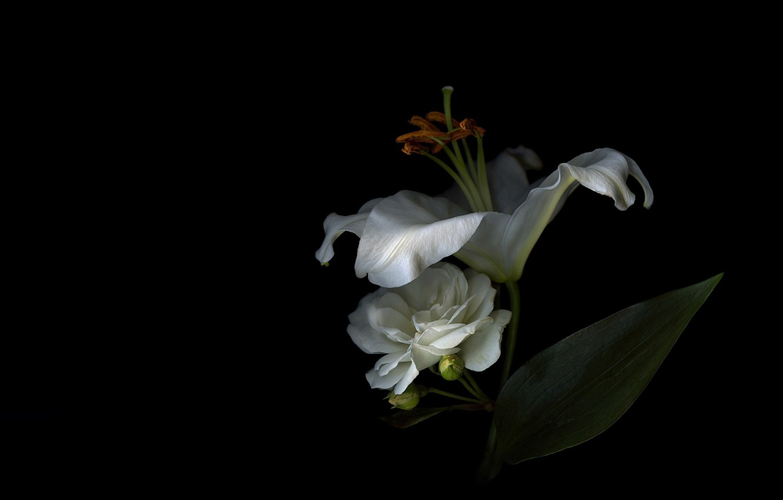 Фото обои свет, фон, лилия, тень, лепестки, тычинки