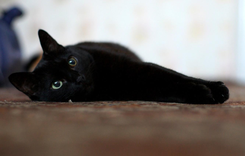 Картинки черного котенка с зелеными глазами