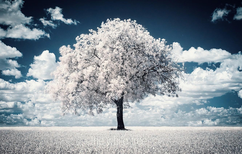 Фото обои дерево, фотограф, photography, photographer, Björn Wunderlich