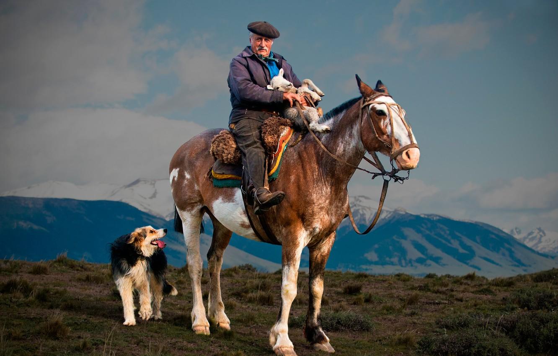 Фото обои лошадь, собака, пастух, ягнёнок