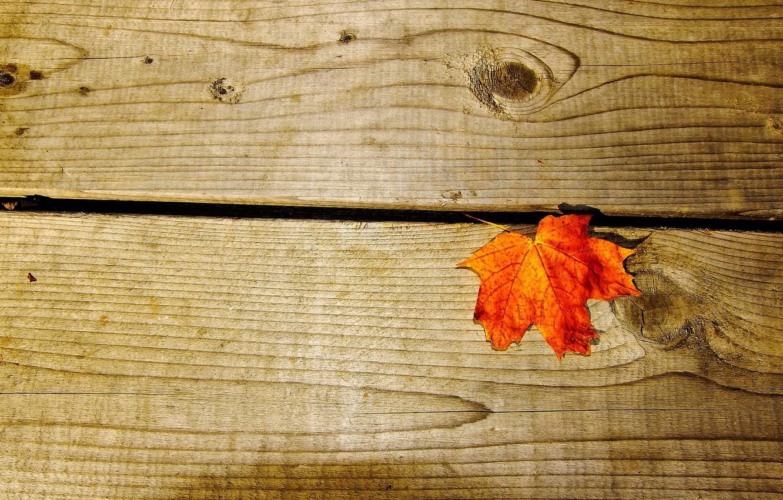 Фото обои макро, оранжевый, фон, дерево, widescreen, обои, доски, листик, wallpaper, листочек, широкоформатные, background, полноэкранные, HD wallpapers, …