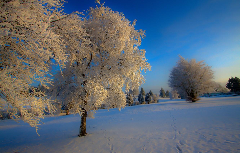 Фото обои зима, снег, природа, иний, дерево