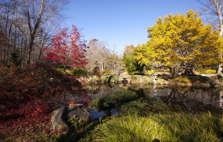 Обои цветы, сша, кусты, ball ground gibbs gardens. Природа foto 9