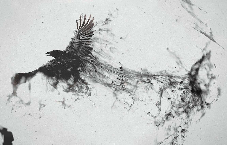 Фото обои птица, черный, след, ворон