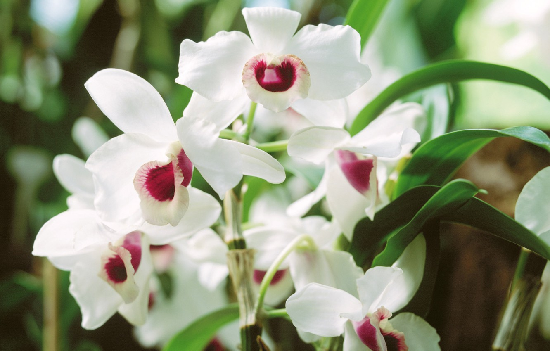 Фото обои белый, обои, весна, лепестки, листик, клумба
