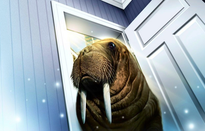 Фото обои комната, дверь, морж