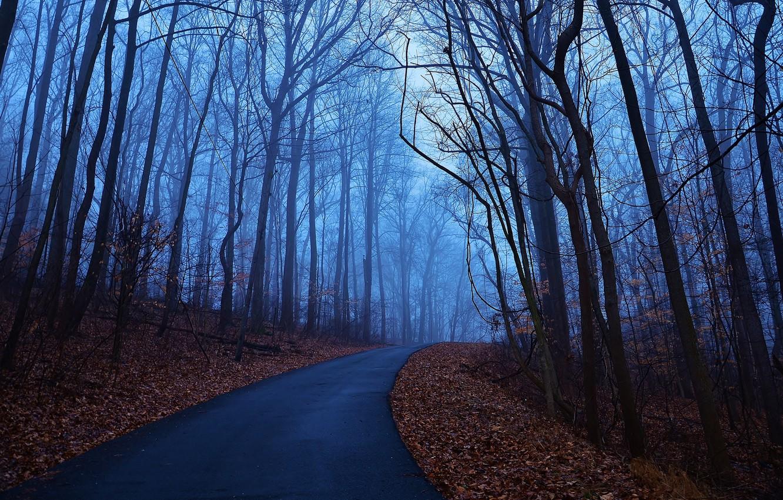 Фото обои дорога, осень, листья, деревья, синий, туман, рассвет, утро, Лес