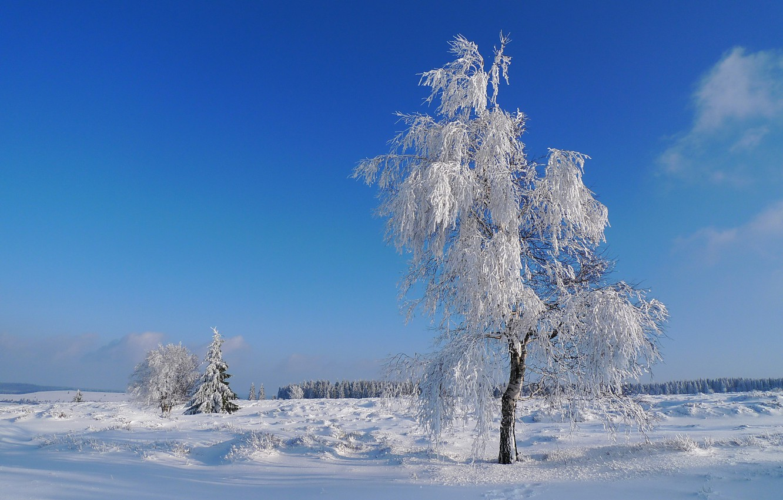 сайте собраны зима в россии картинки на телефон генномодифицированных макак