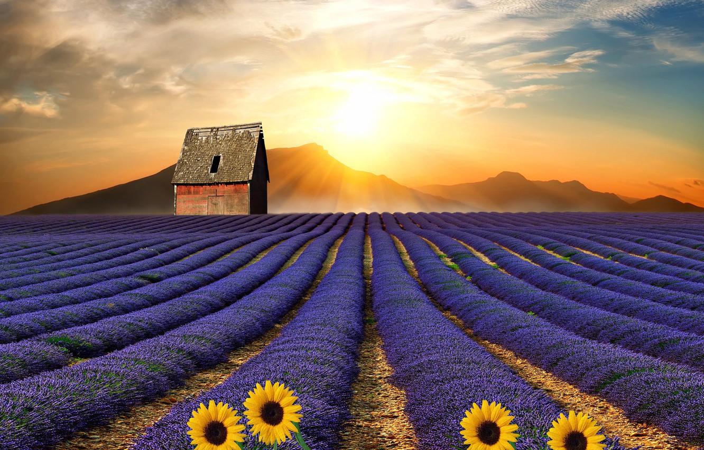 Фото обои поле, солнце, подсолнухи, пейзаж, цветы, горы, дом, растительность
