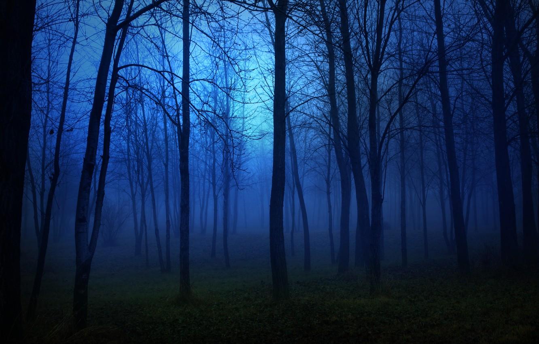 Фото обои лес, свет, деревья, пейзаж, ночь, lights, темнота, страх, луна, moon, forest, trees, night