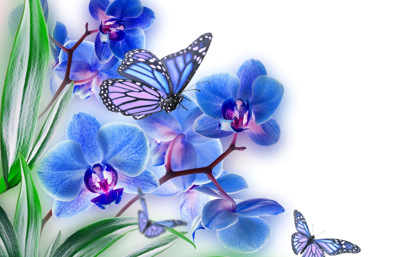 Обои Коллаж, крылья, цветы. Разное foto 9