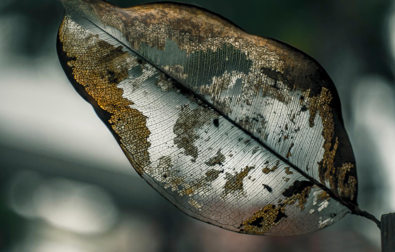 ничего макро фото листьев между